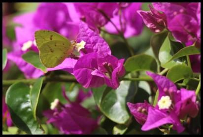 Butterfly 1 800
